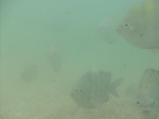 Bombas Beach: Peces que se pueden ver en sepultura