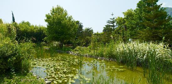 Olympos Lodge: Lake