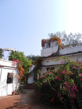 Mitali Homestays: Flowers all over