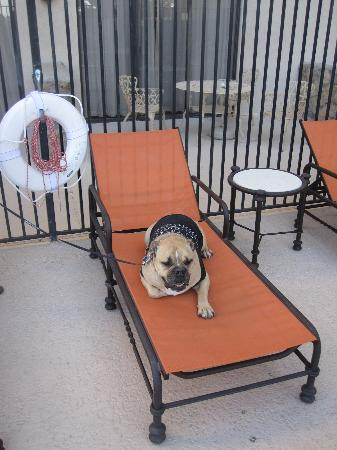 Hotel Encanto de Las Cruces: Poolside relax time for Travelin' Jack
