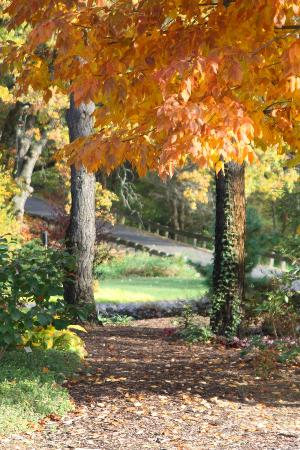 Taltree Arboretum and Gardens : Taltree in the fall