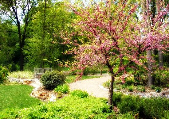 Taltree Arboretum and Gardens: Springtime at Taltree