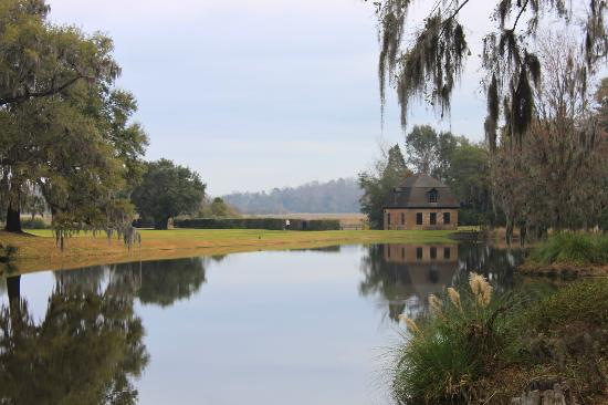 Inn at Middleton Place: The grounds at Middleton