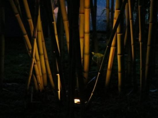Coast Cabins : I loved the lights inset in some of the bamboo clumps!