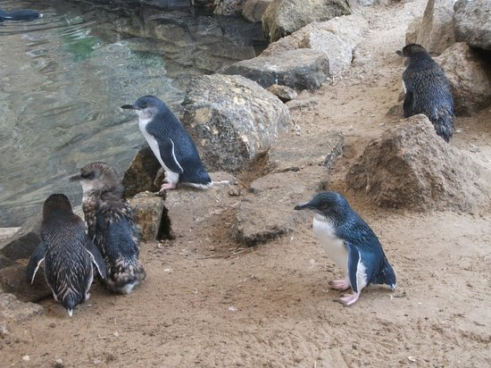 Виктор-Харбор, Австралия: Victor Harbor Penguin Centre