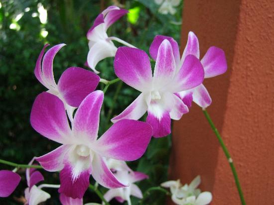 Thousand Flower Garden (Taman Seribu Bunga): Purple orchids