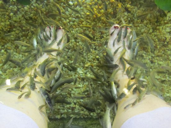 Kenko Reflexology and Fish Spa