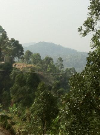 Royal Mist : view from terrace