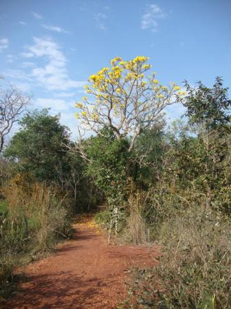 Buraco das Araras Ecoturismo: Buraco das Araras trees