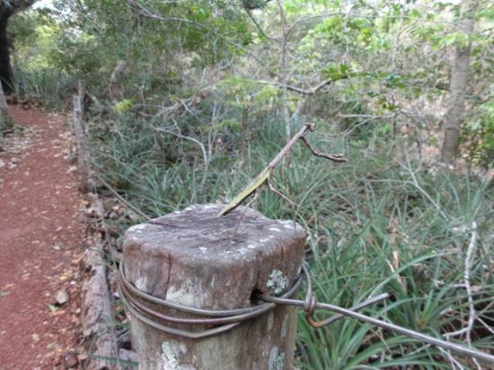 Buraco das Araras Ecoturismo: Buraco das Araras mantis