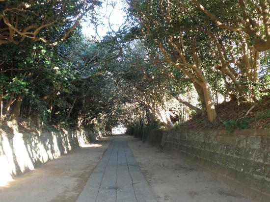 Sakatsura Isozaki Shrine: 参道