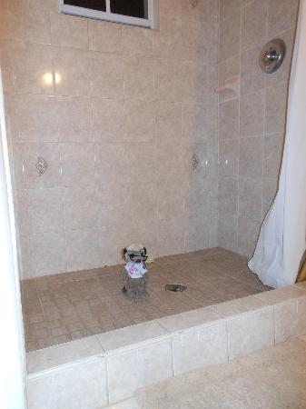 Connie's Comfort Suites: couldnt resist, my meerkat taking a shower!  ;o)