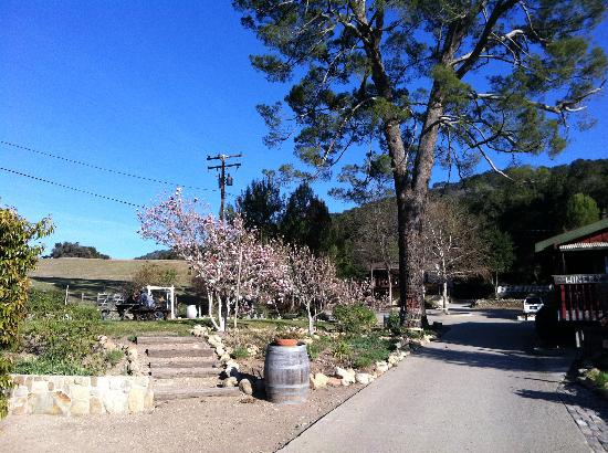 Old Creek Ranch Winery : Picnic area