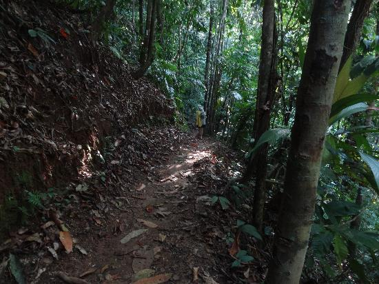 Jinetes de Osa Hotel: The Jungle path from hotel to the good beach