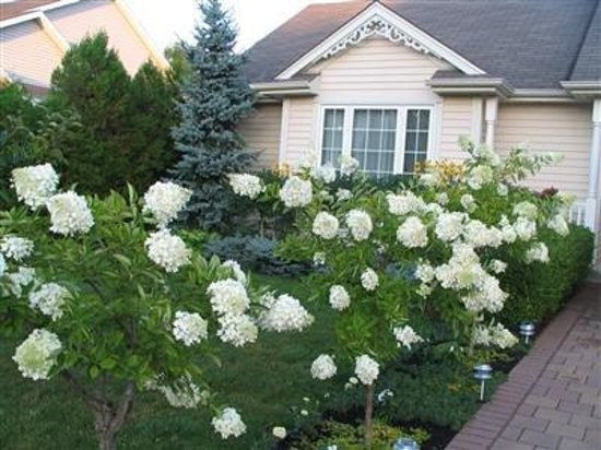 Yolanta's B&B: Hydrangea's leading to front entrance