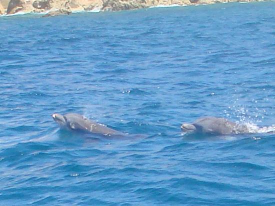 Keloa Charter Private Boat Trip: Dauphins Fev.2012