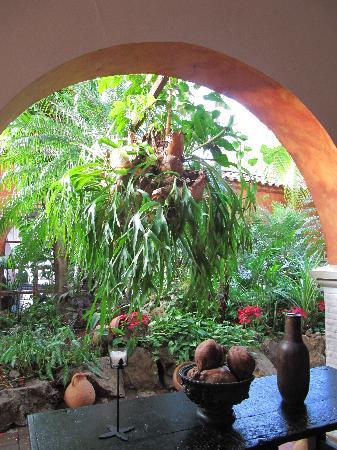Hotel Mariscal Robledo: suo giardino tropicale....