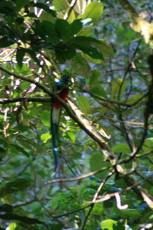 Beyond Adventure Tours: Quetzel (not as good as John's photo but at least I got it!!!)