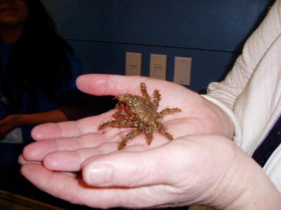 Santa Barbara, Californië: holding a crab (he's quick!)