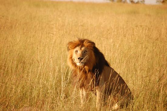Mara Intrepids Luxury Tented Camp: safari