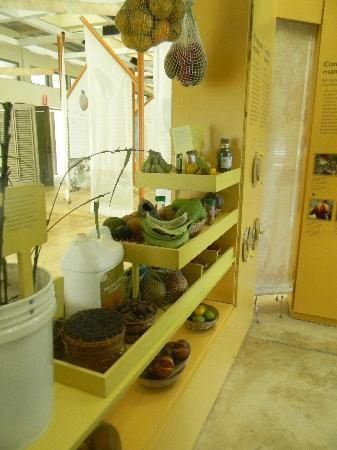 El Portal Tropical Forest Center: native fruit