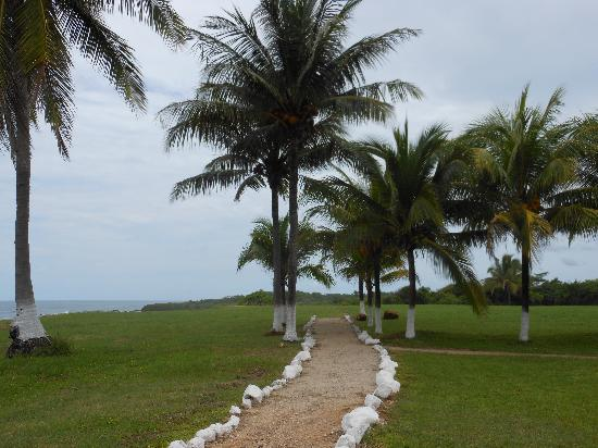 Hotel Iguanazul: A path to where we got married and also if you keep going, it leads to a hill that goes down to