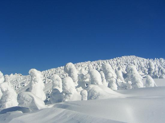 Ani Ski Place: 阿仁スキー場 樹氷