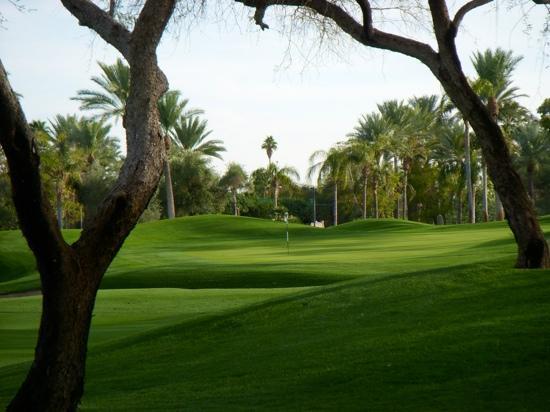 Phoenician Resort Courses: desert #9