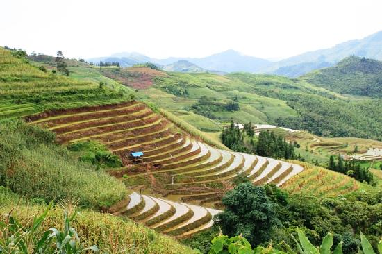 Custom Vietnam Travel Day Tours: Rice terrace on the way to Lung Khau Nhin market