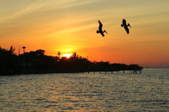 Capt'n Con's Fish House: Sunset and Pelicans