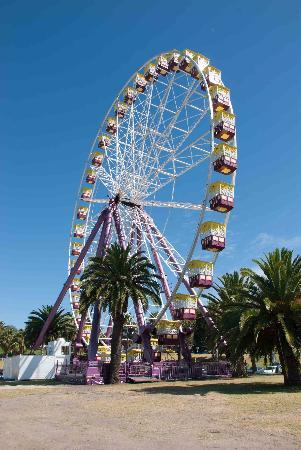 ‪‪Geelong‬, أستراليا: Geelong ferris wheel‬