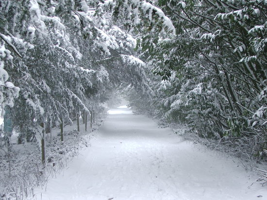 Wendover, UK: Woods in the snow