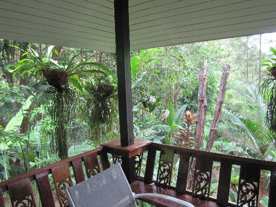 Khao Sok Las Orquideas Resort: View from the window
