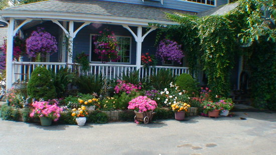 Blue Haven B & B: Jean's home made hanging baskets