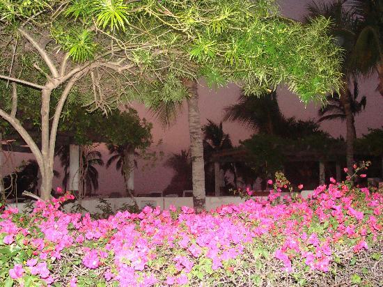 The St. Regis Punta Mita Resort: La vegetation tropicale