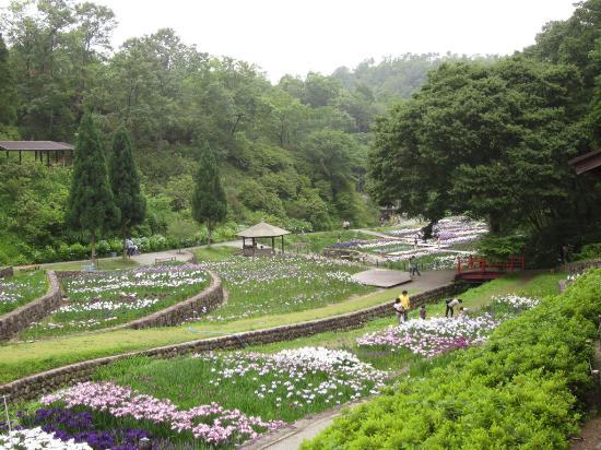 Banshu Yamasaki Hana Iris Garden : From the hillside, view of irises in the park