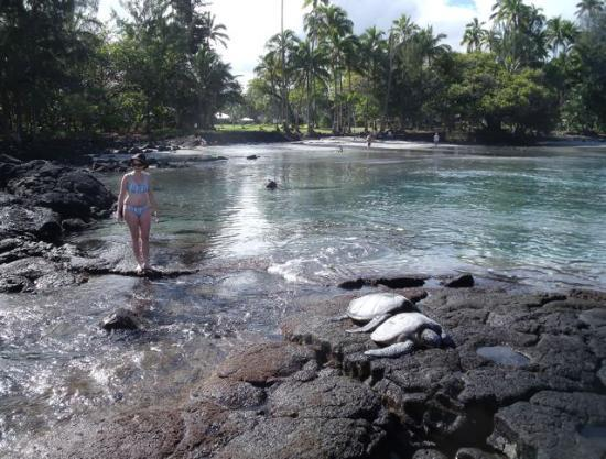 Beaches Near Hilo Hawaiian Hotel