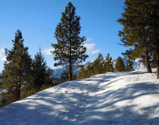Mountain Home Lodge: Snowshoeing up on the ridge