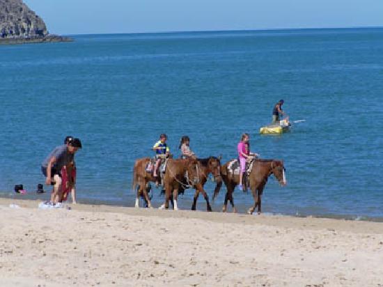 Playa Bonita Condo Suites: Enjoy horse-back riding on the beach!