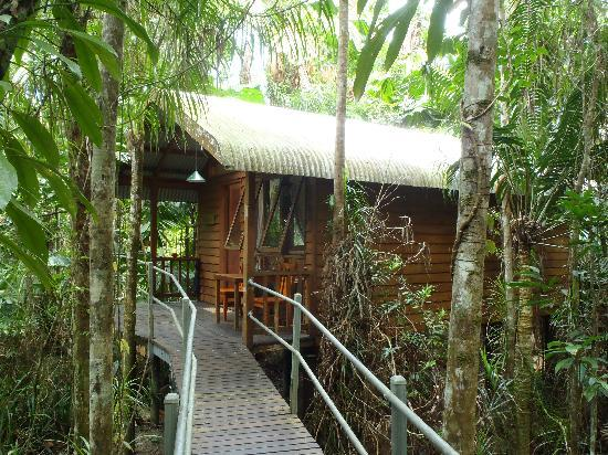 Daintree Wilderness Lodge: Nestled in the middle of the rainforest!