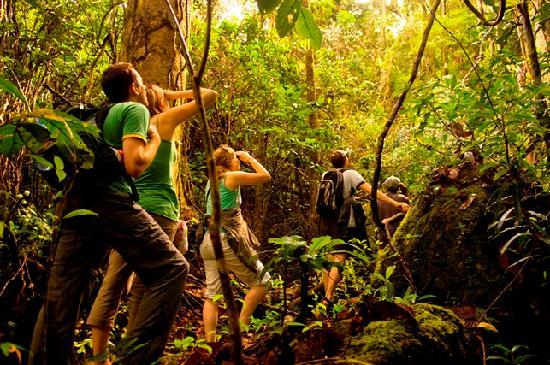 Masoala Forest Lodge: Exploring for wildlife in the primary forest