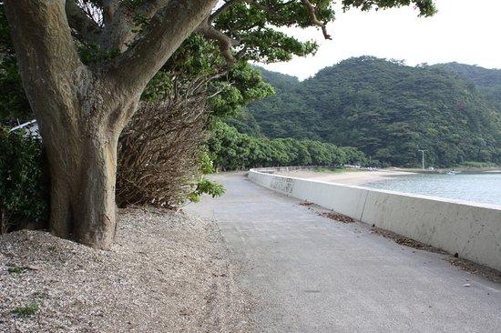 Oshima-gun Setouchi-cho, Japan: ディゴ並木