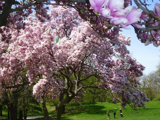 Washington Park : Springtime at the park
