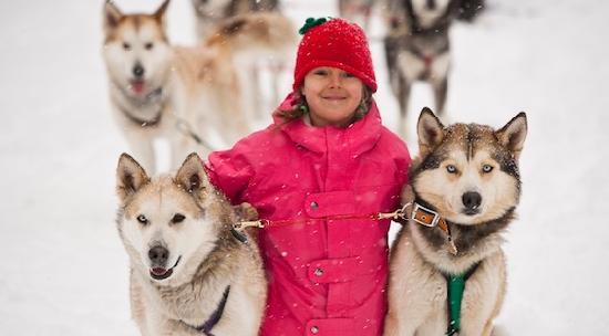 Dog Sledding in Fernie