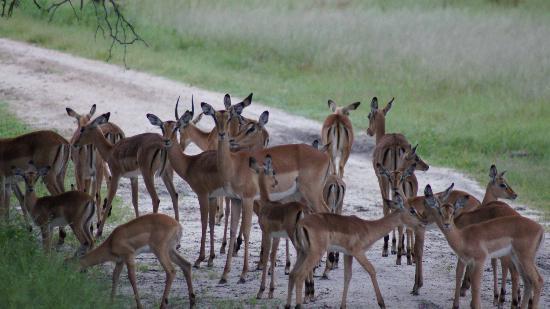 The Hide: Impala