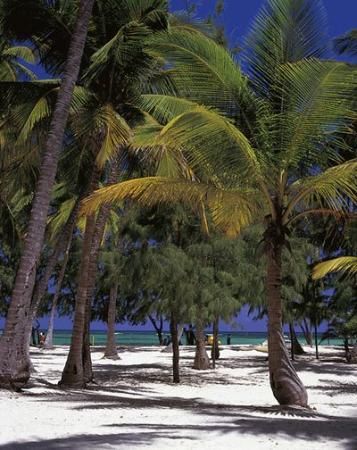 Vista Sol Punta Cana: Playa Hotel
