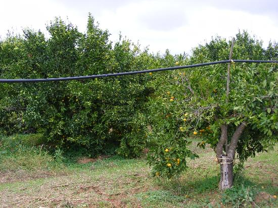 My Life Country House: In the centre of mandarines