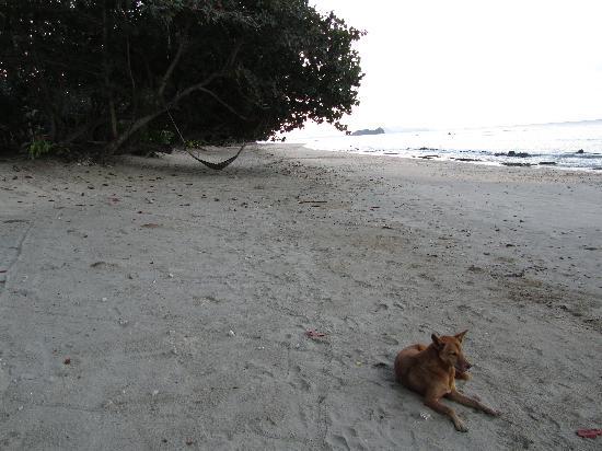 Koh Jum Beach Villas : Beach early morning
