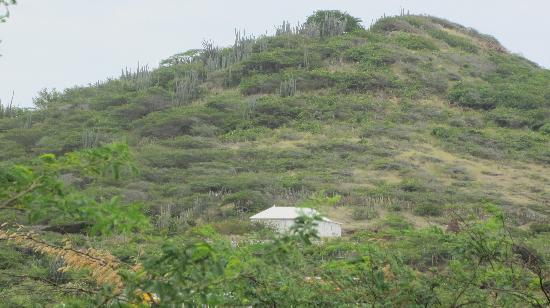 Marazul Dive Resort: Zo groen is de omgeving