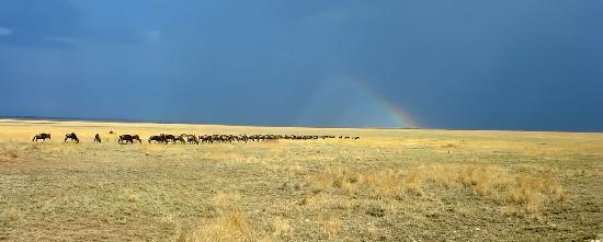 Arusha Region, Tanzanya: Serengeti N.P.